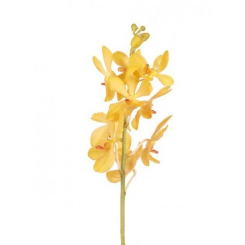 Mokara Orchid, Yellow